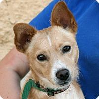 Adopt A Pet :: Evan - Palmdale, CA
