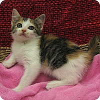 Adopt A Pet :: Christa - Redwood Falls, MN