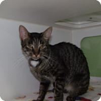 Adopt A Pet :: rosey - Muskegon, MI