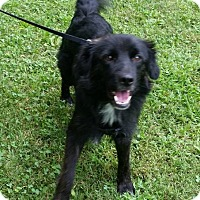Adopt A Pet :: Rose - Merriam, KS