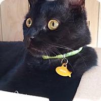 Adopt A Pet :: Vader - Rochester Hills, MI