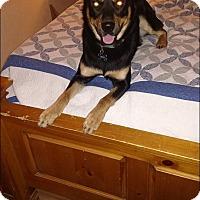 Adopt A Pet :: JACK - Greensboro, NC