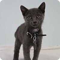 Adopt A Pet :: Punk - Bradenton, FL