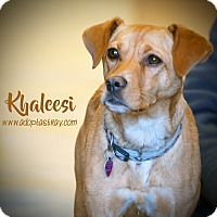 Hound (Unknown Type)/Beagle Mix Dog for adoption in Newport, Kentucky - Khaleesi