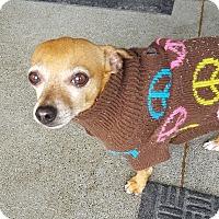 Adopt A Pet :: Moe - Berkeley, CA