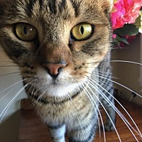 Adopt A Pet :: Miss Mia - Walnut Creek, CA