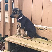 Adopt A Pet :: Sadie - Fairview Heights, IL