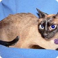 Adopt A Pet :: Lula - Colorado Springs, CO