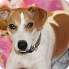 Adopt A Pet :: Anya