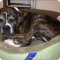 Adopt A Pet :: Leah - Sunderland, MA