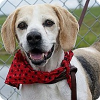 Adopt A Pet :: Shiloh - Indianapolis, IN