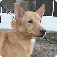 Adopt A Pet :: Josie - Orange Park, FL
