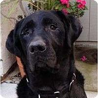 Adopt A Pet :: PABLO - La Mesa, CA