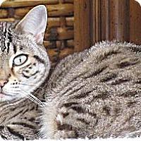 Adopt A Pet :: Mango - Seminole, FL