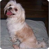 Adopt A Pet :: Dakota - San Angelo, TX