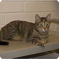 Adopt A Pet :: Maya - New Port Richey, FL