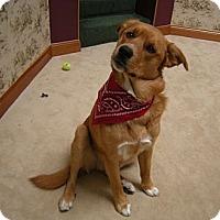 Adopt A Pet :: Redd - Minnetonka, MN