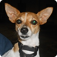 Adopt A Pet :: Peanut - Lockhart, TX