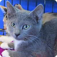 Adopt A Pet :: Gloria - Seminole, FL