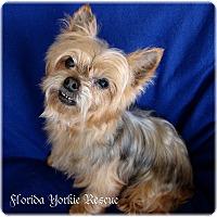 Adopt A Pet :: Frodo - Palm City, FL