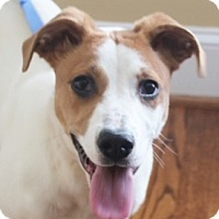 Adopt A Pet :: Darcy - Chapel Hill, NC