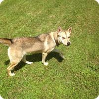 Adopt A Pet :: Sasha - Lufkin, TX