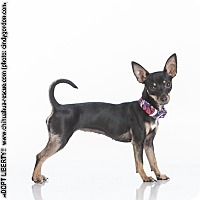 Adopt A Pet :: Liberty - Dallas, TX