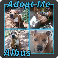 Adopt A Pet :: Albus - Cheney, KS