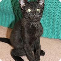 Adopt A Pet :: Hickory - Marietta, GA