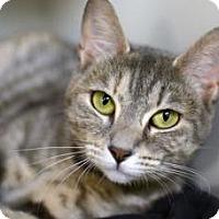 Adopt A Pet :: BELLA SERAFINA'13 - New York, NY