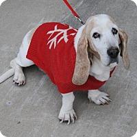 Adopt A Pet :: Annabelle - McKinney, TX
