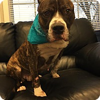 Adopt A Pet :: Bruce-GENTLE SENIOR - Oak Ridge, NJ