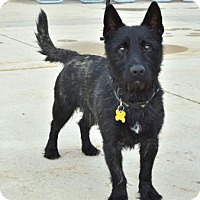 Adopt A Pet :: Ribsy - Salt Lake City, UT