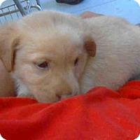 Adopt A Pet :: TROPHY - Conroe, TX