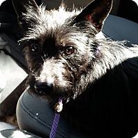 Adopt A Pet :: Disky - Gainesville, FL