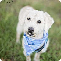 Adopt A Pet :: Tucker - Kingwood, TX