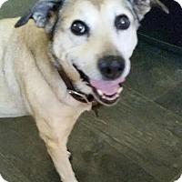 Shepherd (Unknown Type) Mix Dog for adoption in Petaluma, California - Shelby