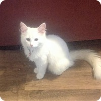 Adopt A Pet :: Marshmellow - Columbia, SC