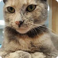 Adopt A Pet :: Elena - Grayslake, IL