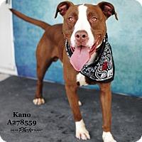Adopt A Pet :: KANO - Conroe, TX