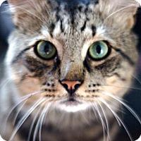 Adopt A Pet :: Garfunkel: Friendly, Handsome, Perfect!! - Brooklyn, NY