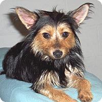 Adopt A Pet :: Tressie - CONOVER, NC