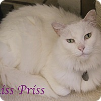 Adopt A Pet :: Miss Priss - Bradenton, FL