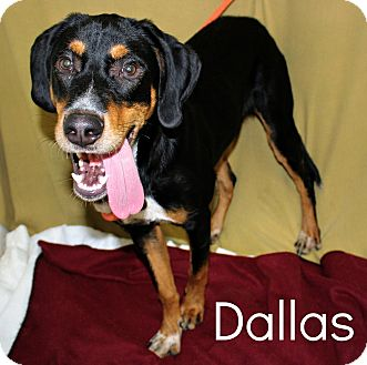 Black and Tan Coonhound Mix Dog for adoption in Melbourne, Kentucky - Dallas