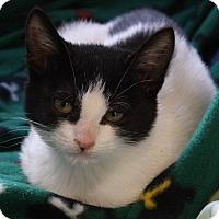 Adopt A Pet :: Twix - Joplin, MO