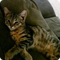 Adopt A Pet :: Princeton - Taylor, MI