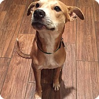 Adopt A Pet :: Sandy(Laylah) - New Braunfels, TX
