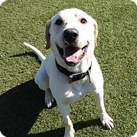 Adopt A Pet :: Tequila - Fairfax, VA