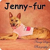 Adopt A Pet :: Jenny - Bedford, TX