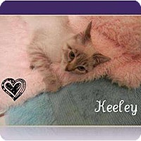 Adopt A Pet :: Keeyle - Mobile, AL